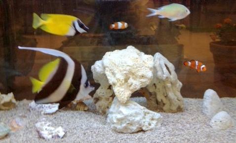 癒し 海水魚 NEW FACE